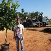 לימון יוריקה- עצי פרי חצי בוגרים | הדר נוי משתלות