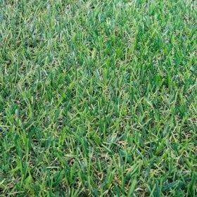 דשא סינטטי ג׳וניור מלמעלה