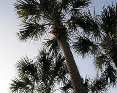סבל פלמטו - עצי נוי | הדר נוי משתלות