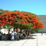 צאלון נאה - עצי נוי | הדר נוי משתלות