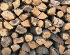 עץ להסקה - עצי נוי | הדר נוי משתלות