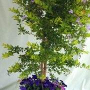 דורנטה מעוצבת פרחים בכד - עצי נוי | הדר נוי משתלות
