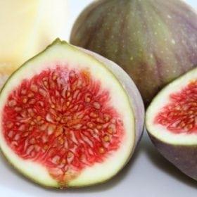 עץ תאנה- עצי פרי | הדר נוי משתלות