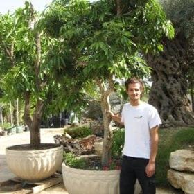 עץ ליצ'י שתול במיכל - עצי נוי | הדר נוי משתלות