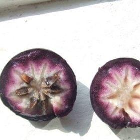 תפוח הכוכב - עצי פרי אקזוטיים | הדר נוי משתלות