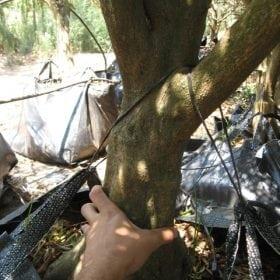 עץ תפוז סיני- עצי פרי | הדר נוי משת
