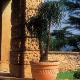 דקורטה - עצי נוי | הדר נוי משתלות