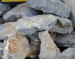 אבן שנהב למסלעה - עצי נוי | הדר נוי משתלות