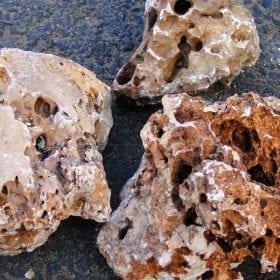 אבן לקט - עצי נוי | הדר נוי משתלות