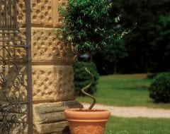 פסטונטו - עצי נוי | הדר נוי משתלות