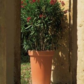 ליק - עצי נוי | הדר נוי משתלות