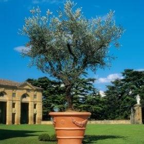 אורנטו - עצי נוי   הדר נוי משתלות