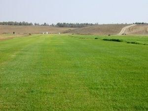 דשא מוכן, איך מתחילים - עצי נוי | הדר נוי משתלות