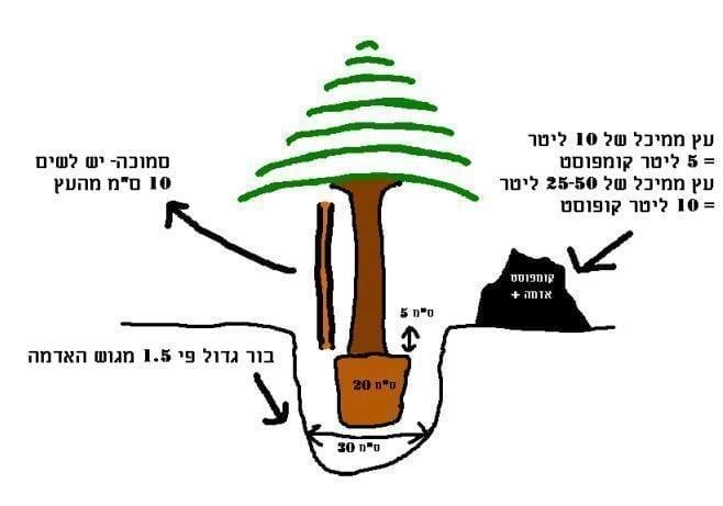 איך לנטוע עץ? - עצי נוי   הדר נוי משתלות