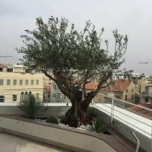 הגינה בחודשי יולי אוגוסט - עצי נוי | הדר נוי משתלות