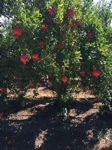 הגינה בחודשי ספטמבר אוקטובר - עצי נוי | הדר נוי משתלות