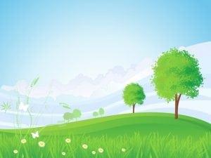 לא על המים לבדם יתפתח העץ - עצי נוי | הדר נוי משתלות