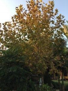 הגינה בחודשי נובמבר דצמבר - עצי נוי | הדר נוי משתלות