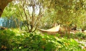 בוסתן - גן עצי פרי וירק - עצי נוי | הדר נוי משתלות
