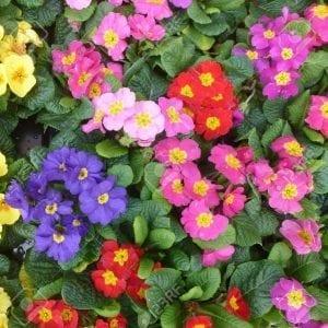צמחים ושיחים