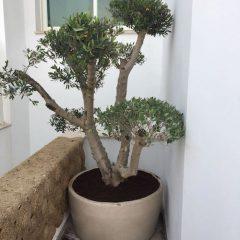איך לטפל בעצים במכלים